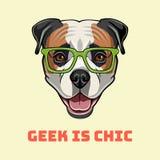American Bulldog geek. Smart glasses. Dog nerd portrait. Vector. American Bulldog geek. Smart glasses. Dog nerd portrait. Vector illustration. Geek is chic royalty free illustration