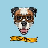 American Bulldog pilot. Dog aviator. Best pilot lettering. Vector. American Bulldog pilot. Dog aviator. Best pilot lettering. Vector illustration Royalty Free Stock Images