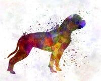 American Bulldog 01 in watercolor Stock Photos