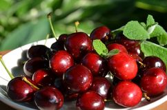 American cherry with applemint as dessert Royalty Free Stock Photography