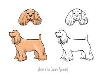 American Cocker Spaniel, front and side views. Bundle of colorful and monochrome line drawings of head and full body of American Cocker Spaniel, front and side Royalty Free Stock Photos