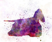 American Cocker Spaniel 01 in watercolor Royalty Free Stock Photos