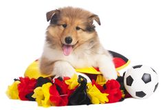 American collie with soccer eqipment Royalty Free Stock Photo