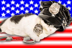 American Cop Cat Royalty Free Stock Image