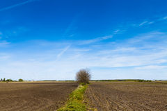 American Country. With blue sky Royalty Free Stock Photo