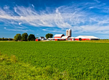 American Country Farm. With soybean plants and blue sky Royalty Free Stock Photography