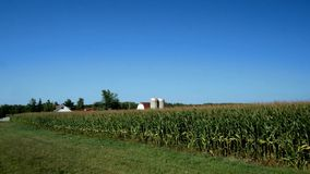 American Country Farm with corn plants field and blue sky