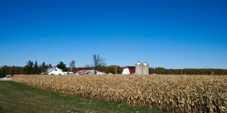 American Country Farm with corn plants field and blue sky stock photos