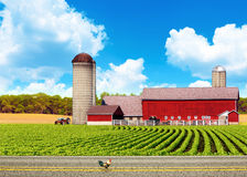 American Country Road With Blue Sky Royalty Free Stock Images