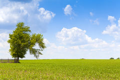 American Countryside Royalty Free Stock Photo