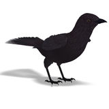 American Crow. 3D rendering with clipping path Royalty Free Stock Photos