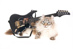 American Curl cat with mini guitar. American Curl cat with miniature black electric guitar, on white background Royalty Free Stock Image