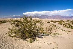 American desert Stock Photography