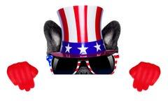 American dog Royalty Free Stock Photo