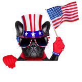 American dog Stock Photography
