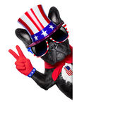 American dog Royalty Free Stock Image