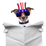 American dog reading Stock Photo