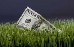 Dollars in green grass Royalty Free Stock Photo