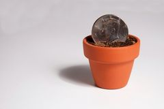 American Dollar Coin Planted in a Pot Royalty Free Stock Image