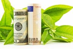 American dollar and European euro in fresh partnerships Royalty Free Stock Photo