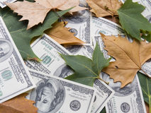 American dollars and autumn  leaves Stock Image