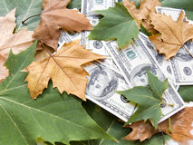 American dollars and autumn  leaves Stock Photo