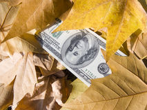 American dollars and autumn  leaves Royalty Free Stock Photos