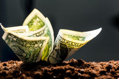 American dollars grow Royalty Free Stock Images