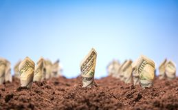 American dollars grow from the ground Royalty Free Stock Photos