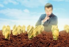 American dollars grow from the ground Stock Photography
