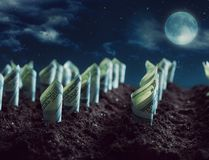American dollars grow from the ground Royalty Free Stock Photo