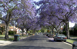 American Dream Street Stock Image