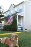 American Dream. Sweet home with flag and lovely golden retriever dog sitting on green front lawn Royalty Free Stock Photos
