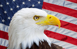 Free American Eagle Royalty Free Stock Photos - 6148478