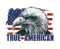 American eagle against USA flag. Royalty Free Stock Image