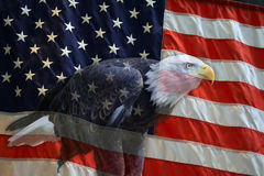 American Eagle Flag. American flag with American Bald Eagle superimposed Stock Image