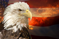 American eagle and flag Royalty Free Stock Photos