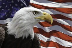 American Eagle with Flag. An American eagle and US Flag Stock Photo