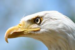 American Eagle Head Stock Photos