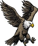 American eagle isolated royalty free illustration