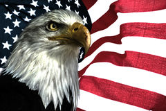 American eagle. National symbol for USA. East eagle on the american flag Stock Images
