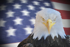 American eagle portrait Royalty Free Stock Photo