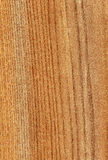 American elm wood. Fine texture of american elm wood stock photography