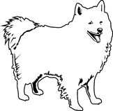 American eskimo black and white Stock Photos