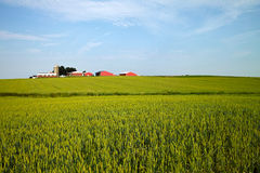 American Farm. A landscape of a typical midwestern American farm on a sunny June evening Stock Photography
