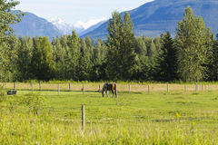 American Farm in Alaska stock photo