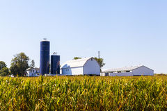 American Farmland Royalty Free Stock Photography