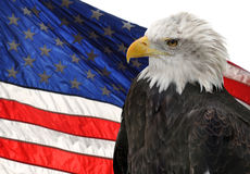 American flag and Bald Eagle. The American flag and Bald Eagle, symbols of freedom and democracy royalty free stock images