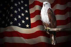 American flag and bald eagle Stock Photography