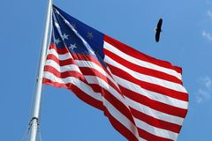 American flag and bald eagle. An American flag with a bald eagle flying in the sky overhead stock photo